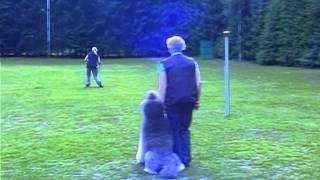 Obedience Training Bei Den Hundefreunden Lengerich