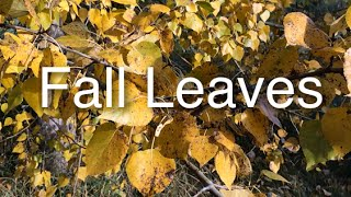 4 EZ ways to Organically Enhance your Garden Using Leaves Compost Mulch Mold