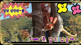 소양강댐 냥이아빠사랑  버스킹공연 가을단풍 통나무닭갈비…