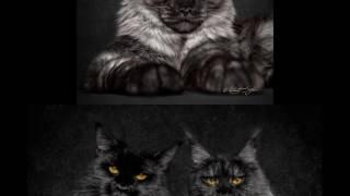 Свежая подборка кошек. Мейн-кун самые большие кошки в мире.
