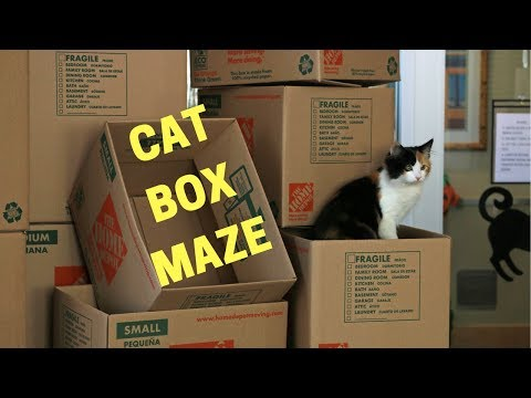 cat-box-maze-for-shelter-cats