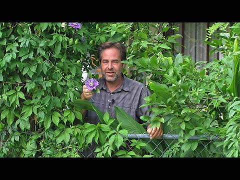 Permaculture Paradise:  Alex Ojeda Stomps On the Weeds!