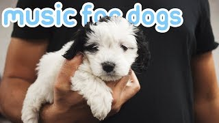 11 HOURS of Relaxing Dog Music to Reduce Anxiety and Help Dogs Sleep!