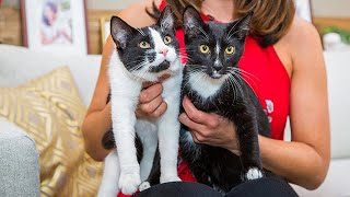 Adoption Ever After - Figaro and Ariel - Home & Family
