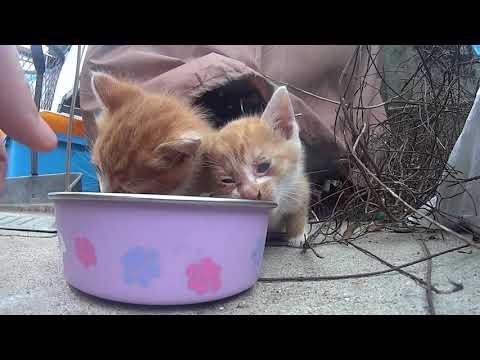 今日は長めに…野良子猫がカリカリを一粒ずつたべるのがとてもかわいい