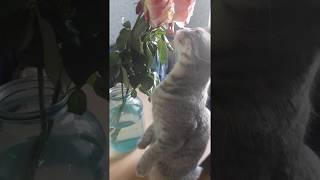 Кошка Дымка нюхает цветы, стоя на задних лапках