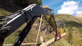 🌲 🌳 Forst technik/Waldarbeit 🌲 🌳Problembäume fällen Teil 3