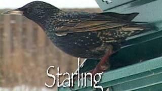Day At Bird Feeder - Time Lapse Mini-documentary