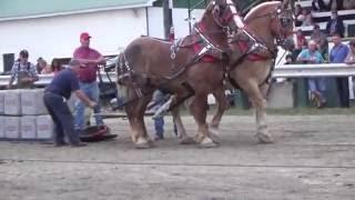 finale Tir de chevaux à Cookshire aout 2016