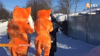 Оранжевые коты оказали поддержку «своим собратьям» в приюте