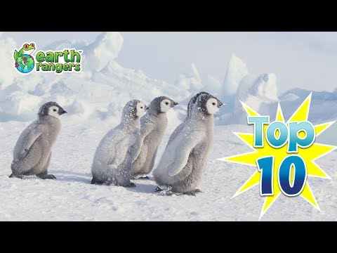 Top Ten Ways Animals Survive the Winter