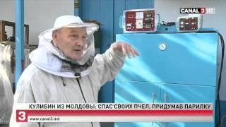 Изобретатель из Молдовы придумал как спасти пчёл от клеща