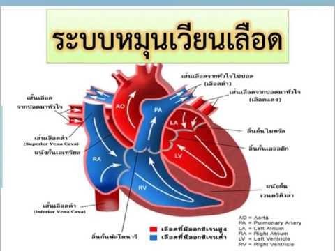 เพลงระบบหมุนเวียนเลือด วิชาวิทยาศาสตร์ ชั้น ม.2 สอนโดย ครูเอเดียน คุณาสิทธิ์