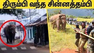 Coimbatore Chinna Thambi Elephant Re – entered