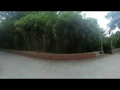 DC 360: Lions at the Smithsonian's National Zoo