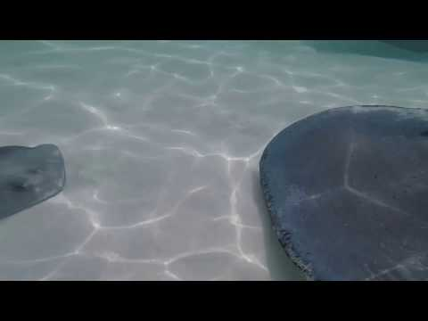 GoPro Hero 5 video, feeding the stingrays at Stingray City, Cayman Island 2017