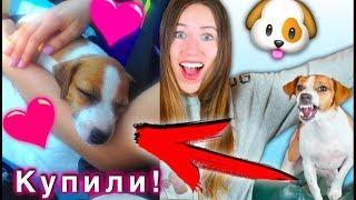 БЕРЕМ СОБАКУ ! КАК Я ПОКУПАЛА ДЖИНУ МОЯ ИСТОРИЯ | Elli Di Pets