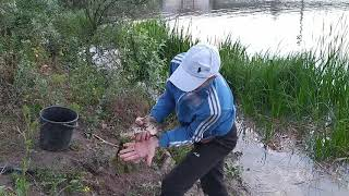 Ловля Карася 600грам Херсон Дельта Днепра 30 05 2020