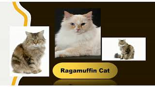 CAT BREEDS for  Cat Lovers