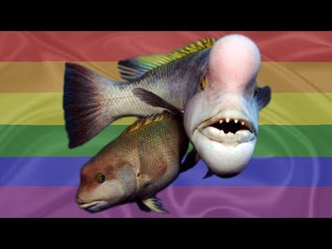 Transgender Fish Filmed Switching Genders
