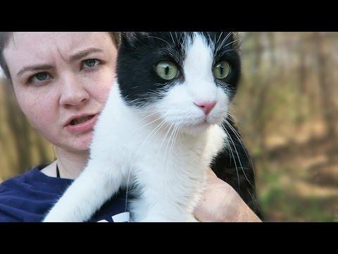 Our Crazy Cat Escaped!