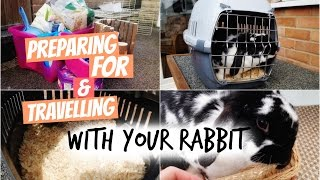 Preparing For & Travelling With Your Rabbit | RosieBunneh