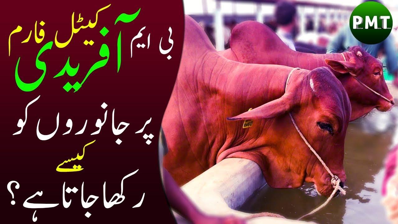 Cattle Market Karachi