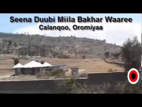 Download Seena Duubbi Miila Bakhar Waare by Jafar Ali