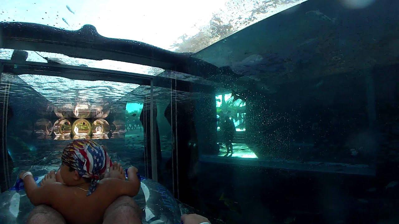 дубай аквапарк фото атлантис