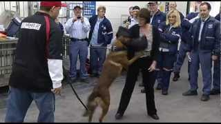 Raw Video: Post Office Workers Get Hands On Training To Stop Dog Attacks