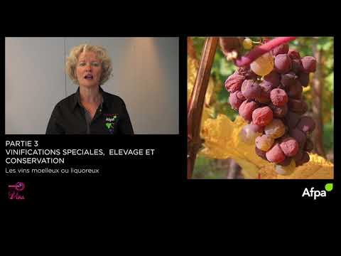 UA3 - Video 3   - Les vins moelleux ou liquoreux