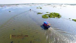 Red Lotus Lake | Kumphawapi | Thailand 4K