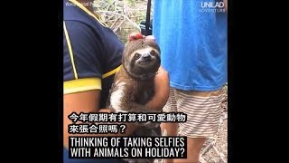 與野生動物合照:動物虐待?! The Dark Truth Behind Animal Selfies