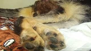В Кинеле спасают собаку-поводыря, которую жестоко избили и выбросили на помойку