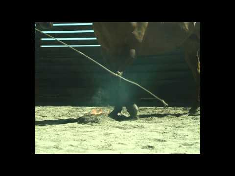 Trick / Specialty / Liberty Horse trainer Kerry Hansen & 'Savanah Valentine' Play With Fire