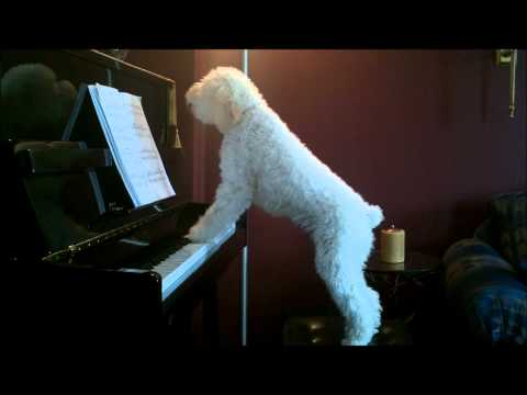 Tucker piano Dec 7'2010.wmv