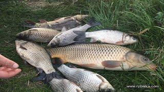 Рыболовная насадка ПАМЕЛА Может это и есть убийца карася