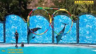 """Театр морских животных """"Акватория"""" (Ялта):умения дельфинов"""