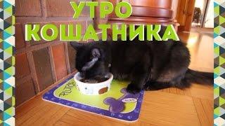 Утро кошатника (совместно с Polina Cat)