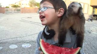 baby monkey nala eats watermelon with Draven