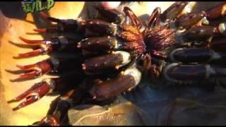 Kilalanin ang mga Horseshoe Crab! | Born to be Wild