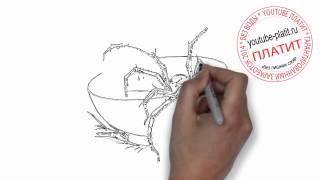 Как нарисовать плавающего паука и паутину(Как нарисовать паука поэтапно карандашом за короткий промежуток времени. Видео рассказывает о том, как..., 2014-06-29T07:53:40.000Z)