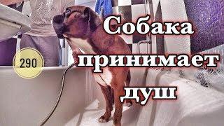 Собака принимает душ.The dog takes a shower.