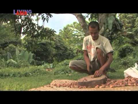 BECOL: MEET THE PILI | Living Asia Channel