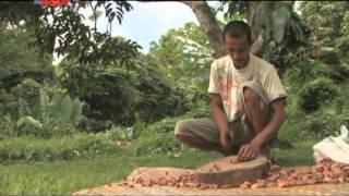 Bicol: Meet the Pili