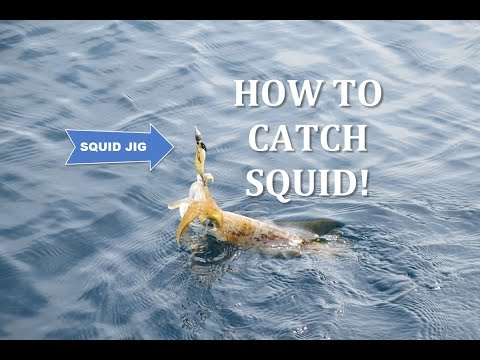 Rompin Offshore - How to catch squid using drift eging & iki jime!