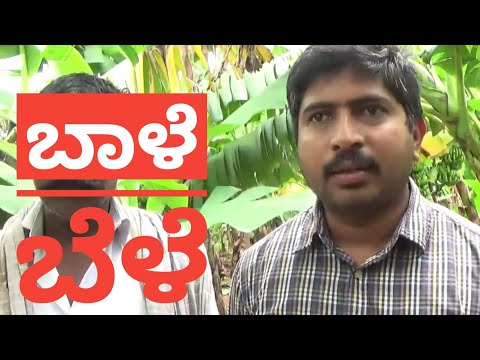 A Success Story Of Banana Cultivation Youtube