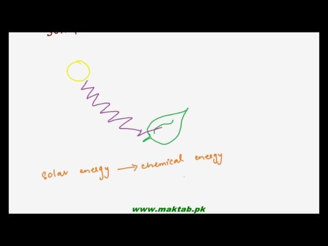 FSc Biology Book1, CH 11, LEC 1  Introduction To Bioenergetics   Maktab pk