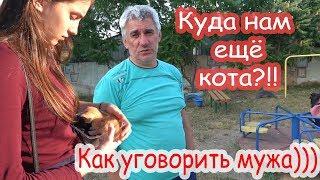 VLOG Один котенок умер, второму нужна помощь