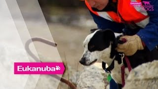 The New Zealand Search And Rescue Dogs - Part 1 | Extraordinary Dogs